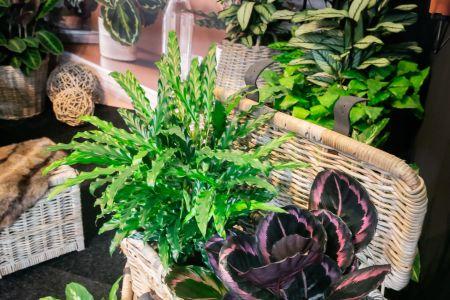 Natur und Pflanzen